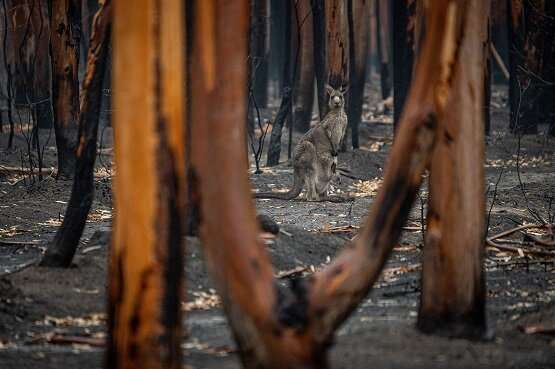 Research highlights potential for mobile phone signals to measure bushfire smoke levels