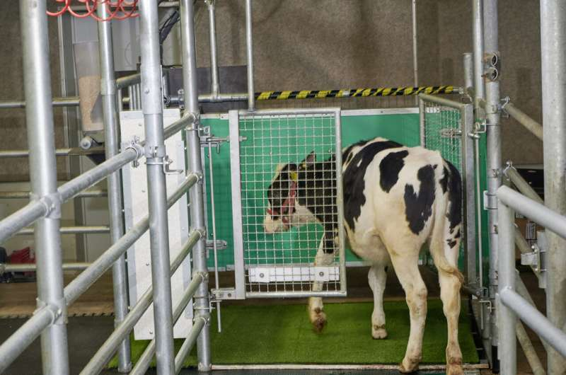 Researchers are toilet-training cows to reduce ammonia emissions caused by their waste