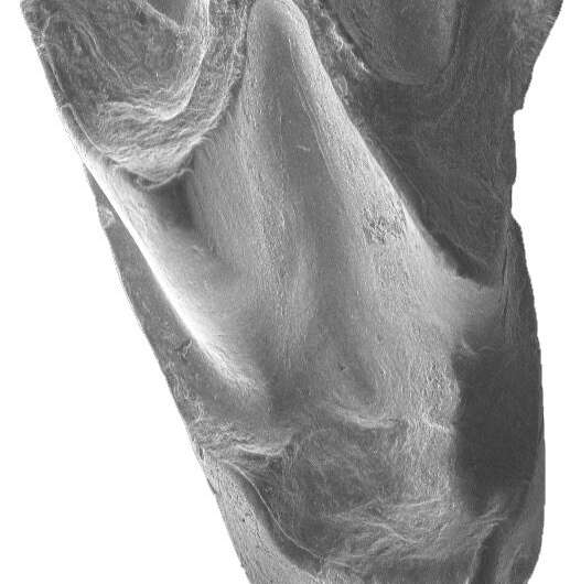 Researchers detail the most ancient bat fossil ever discovered in Asia