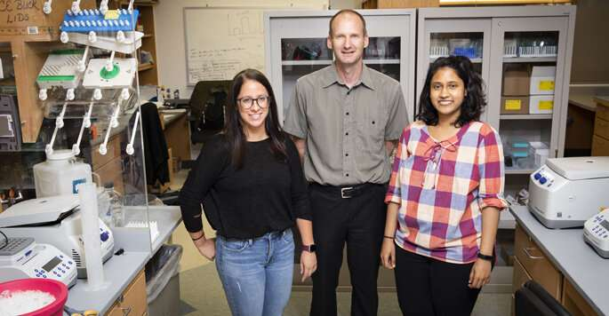 Researchers discover that protein switches functions to regulate DNA replication