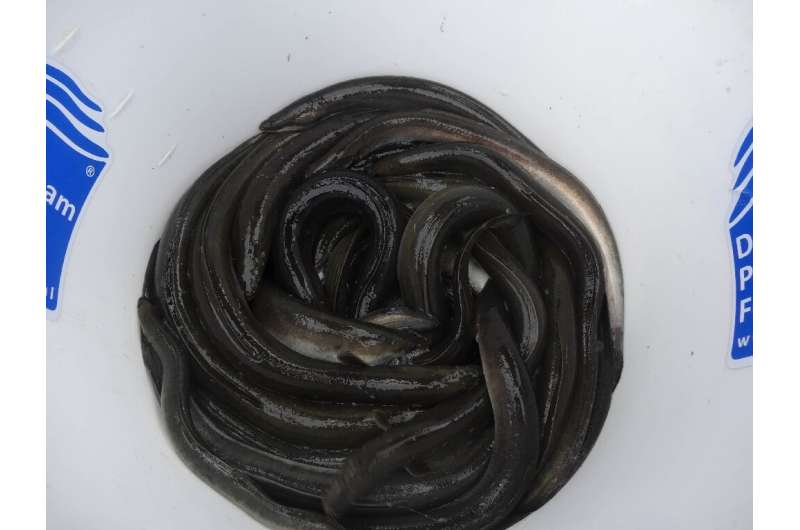 Researchers expressed concern about the effect on the life cycle of the protected European eel