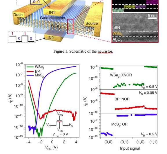 Researchers fabricate logic gates based on neuristors made of 2D materials