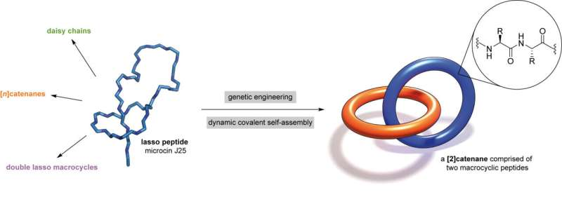 Researchers invent world's smallest biomechanical linkage