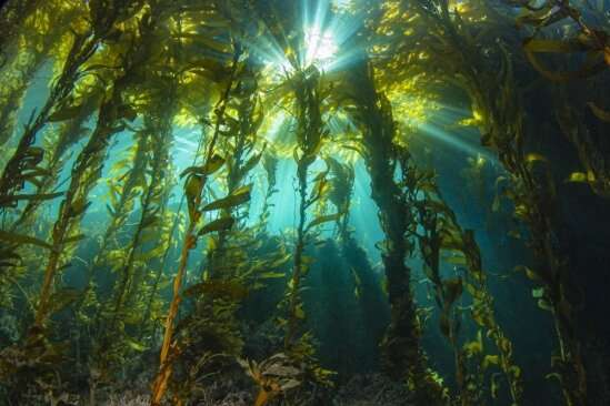 Researchers investigate the productivity of kelp forests, sans the iconic kelp