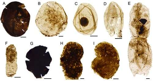 Researchers reveal diverse microfossil assemblage from mesoproterozoic xiamaling formation in north china