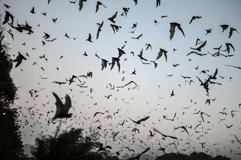 Researchers said their findings show that viruses genetically close to the SAR-CoV-2 pandemic virus 'exist in nature' among bat