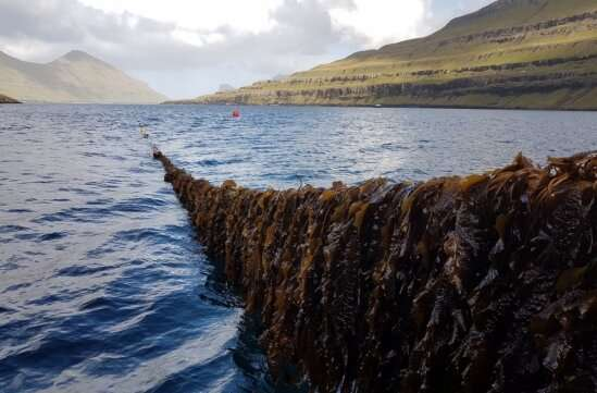Researchers say cultivated seaweed can soak up excess nutrients plaguing human health and marine life