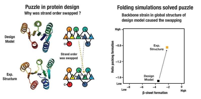 Researchers solve a puzzle to design larger proteins