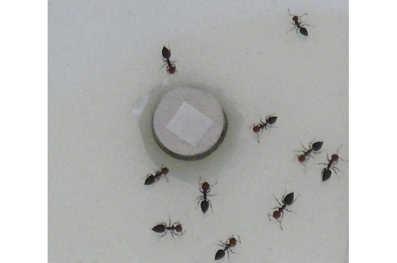Los investigadores traducen los productos químicos de defensa contra insectos en sonidos aterradores
