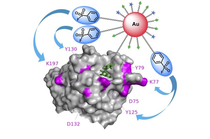 Researchers use multivalent gold nanoparticles to develop efficient molecular probe