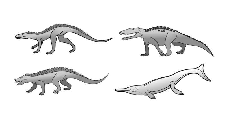 Research explains why crocodiles have changed so little since the age of the dinosaurs