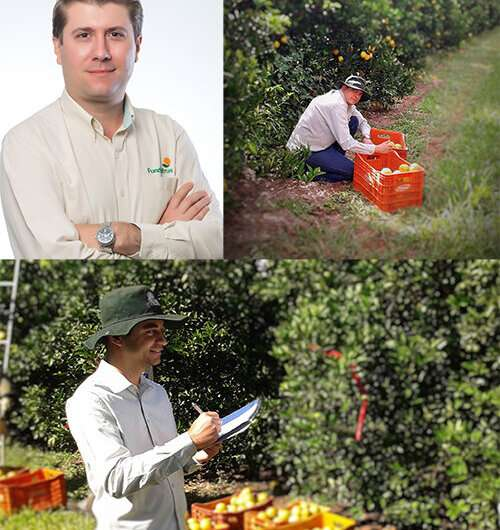 Research identifies more sustainable, cost-effective approach to treating citrus canker