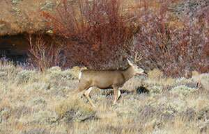 Research outlines innovative legal strategies for conserving big-game migration corridors