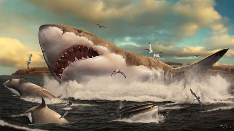 Research reveals how teeth functioned and evolved in giant mega-sharks