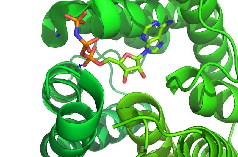 Retooling small molecule kinase inhibitors for Sars-CoV-2