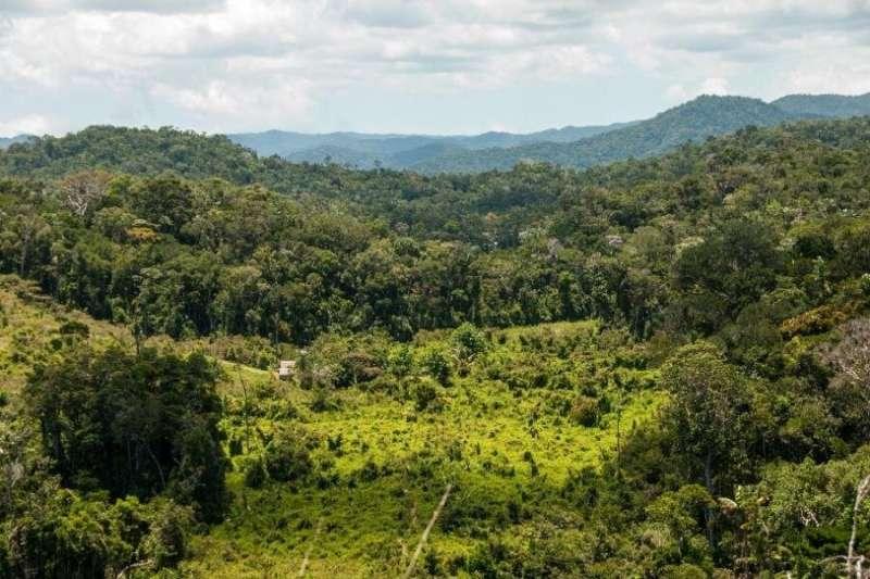 Revealing hidden extinction risk in Madagascar's rare plant species