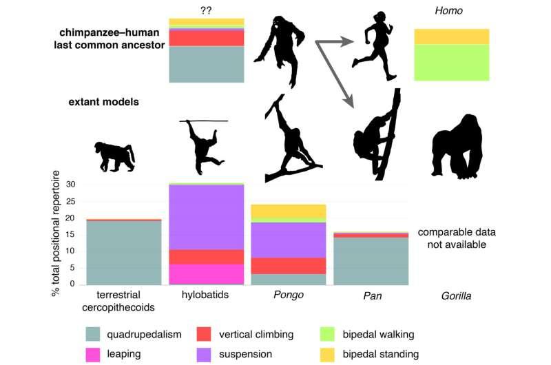 Revisión: la mayoría de las historias de origen humano no son compatibles con fósiles conocidos