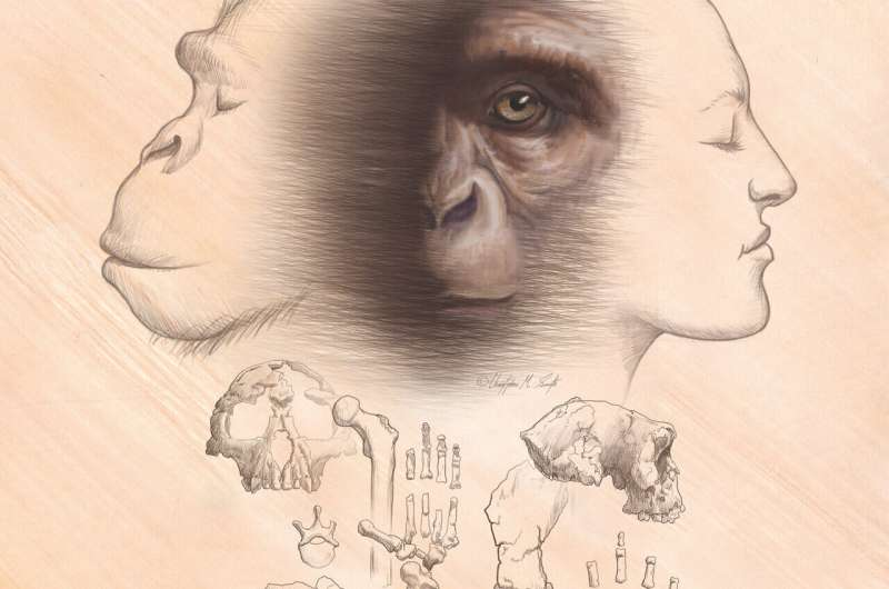 Review: Most human origins stories are not compatible with known fossils