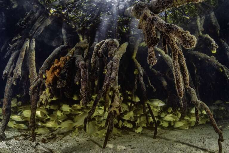 Reforma de raíces y ramas: protección y restauración de los manglares del mundo