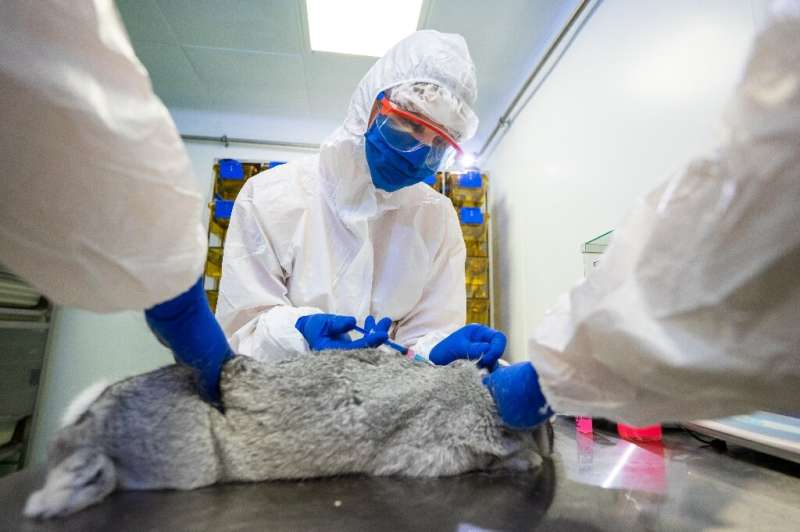 Russia said mass production of the vaccine for animals could begin in April