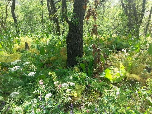 Sacred natural sites protect biodiversity in Iran