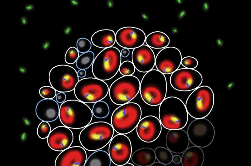 Same difference: predicting divergent paths of genetically identical cells