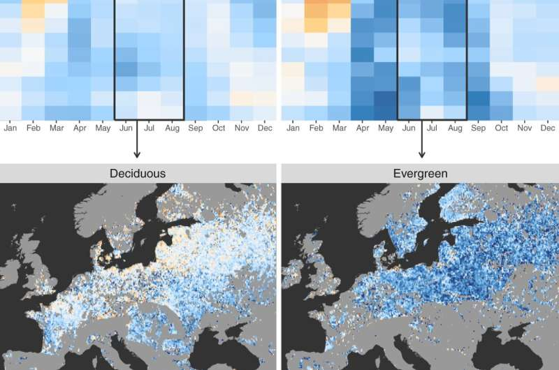 Satellites reveal how forests increase cloud and cool climate