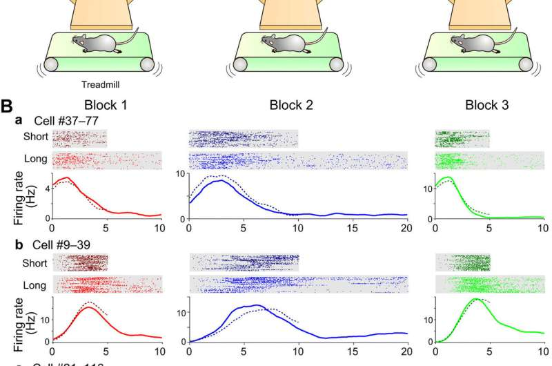 Scalable representation of time in the hippocampus