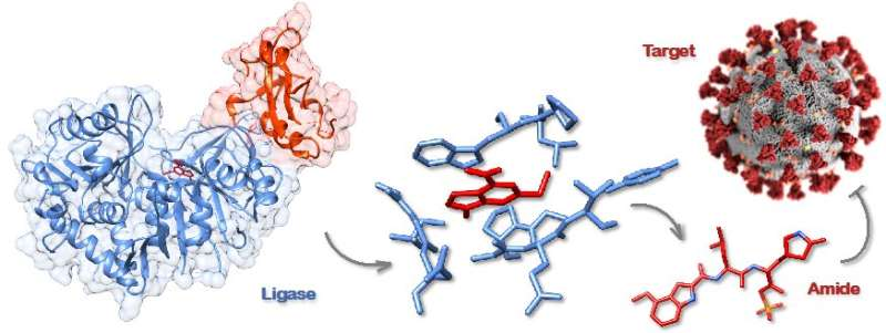 Scientists accelerate path to drugs for COVID-19