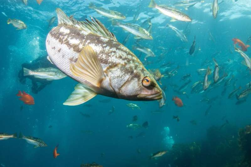 Scientists create genetic library for mega-ecosystem in Pacific Ocean