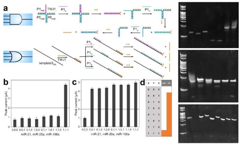 Para ilmuwan mengembangkan sirkuit logika baru untuk DNA