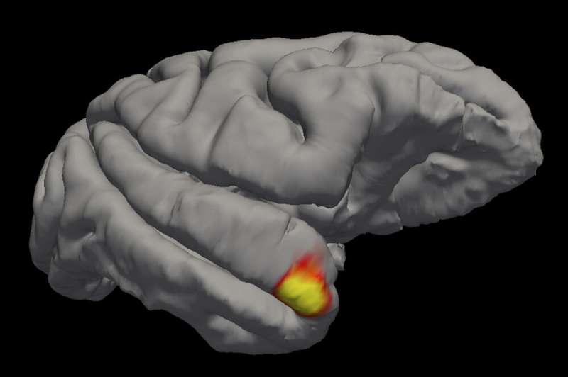 Scientists discover a new class of memory cells in the brain