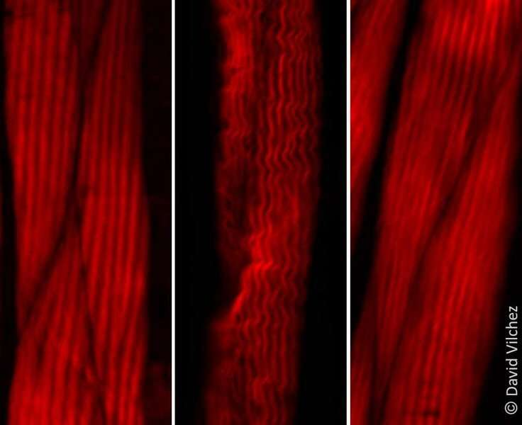 Scientists discover new regulators of the aging process