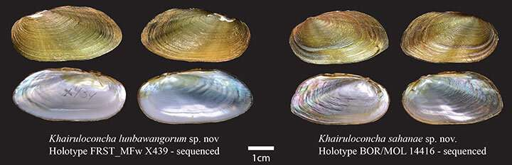 Scientists discover two new species and new genus of freshwater mussels in Borneo