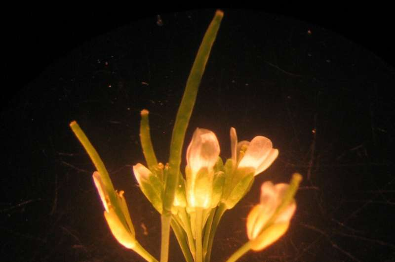 Scientists discover unreported plant body part