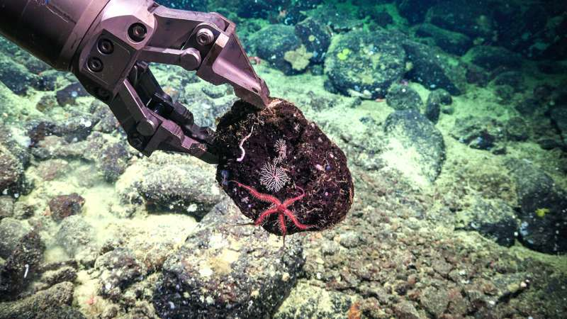 Scientists explore mineral-rich seafloor and DDT dump sites; discover new methane seep, whale fall