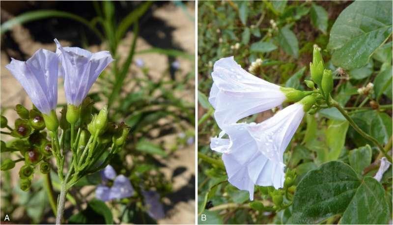Científicos identifican cinco nuevas especies de plantas en Bolivia