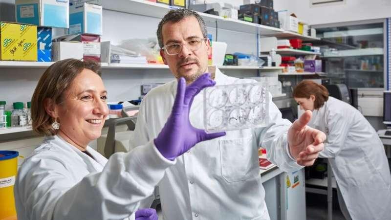 Scientists make 'long-range weather forecasts' of bowel cancer's drug resistance