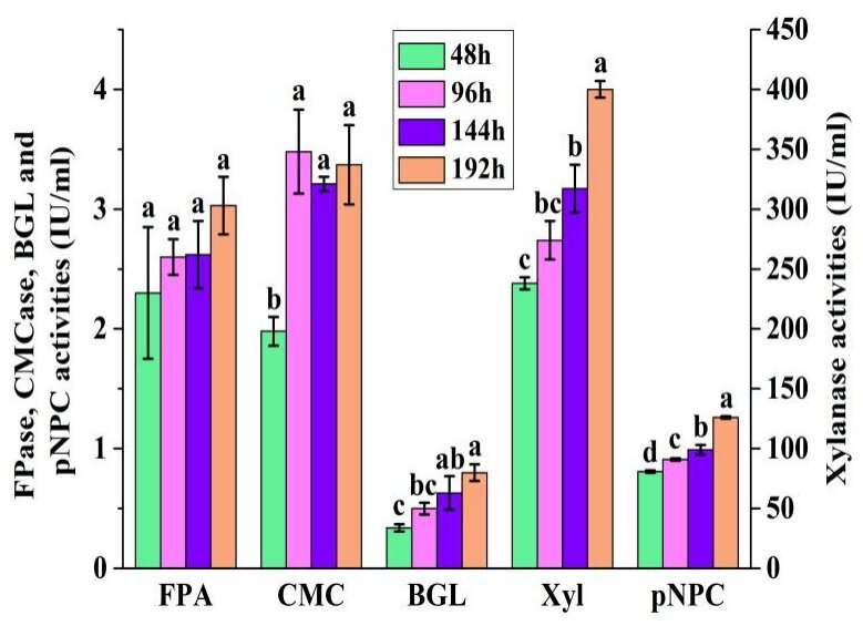 Scientists report efficient use of waste paper for cellulase production by Trichoderma longiflorum