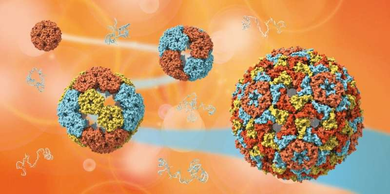 Scientists uncover the mysteries of how viruses evolve