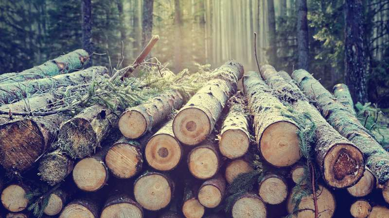 Scientists make sustainable polymer from sugars in wood