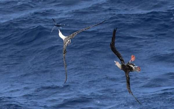 Seabirds are today's canaries in the coal mine – and they're sending us an urgent message