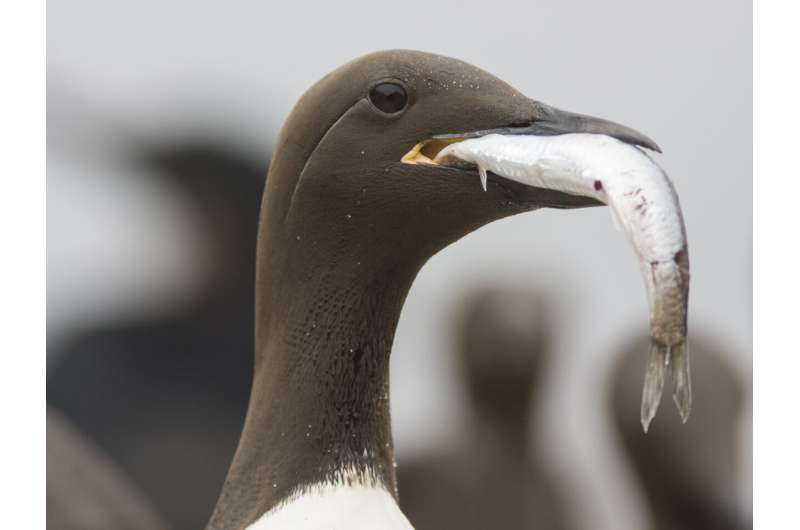 Seabirds face dire threats from climate change, human activity — especially in Northern Hemisphere