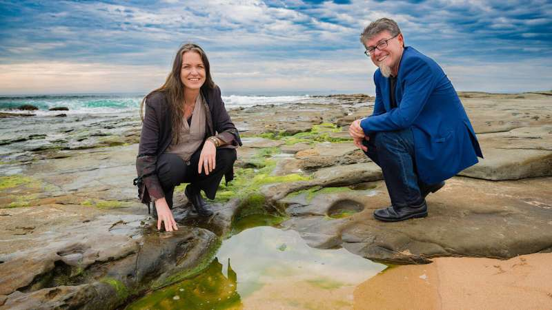 Seaweed molecules found to aid wound healing