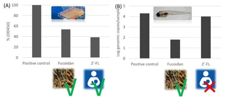 Seeking anti-human norovirus solutions using zebrafish