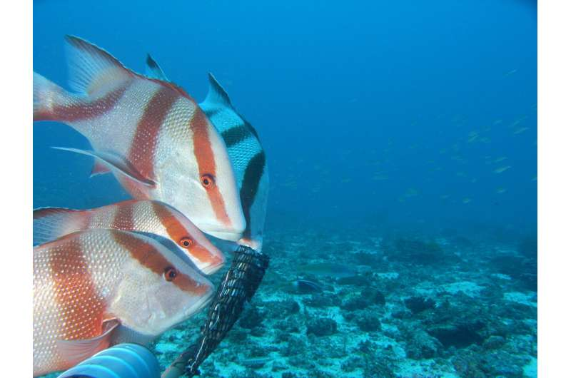 Seismic surveys have no significant impact on commercially valuable fish in NW Australia