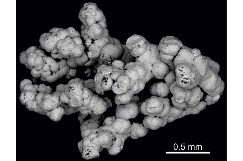 Selenium may support deep microbial life in Earth's continental crust
