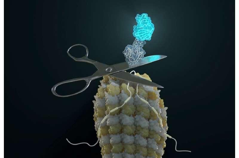 Self-excising designer proteins report isoform expression