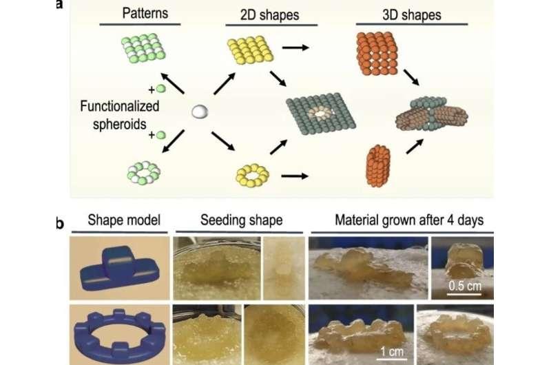 Self-healing 'living materials' used as 3D building blocks