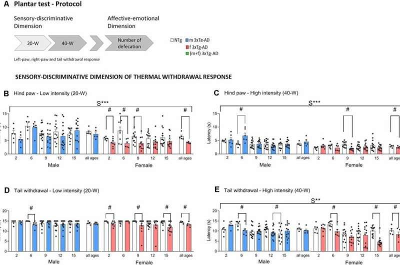 Sensitivity to painful external stimuli preserved in all phases of Alzheimer's disease in mice